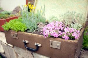 Зелень на вырост: 11 наборов для выращивания растений