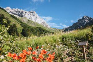Хочешь за окошком Альпы? Как производят натуральную косметику и какие средства купить весной