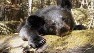 Краудфандинг в стиле Seasons: редкая литература для всех, детский лагерь на острове и фильм глазами медвежонка