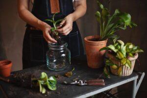 Детский сад: советы флориста Антона Шуранова, как озеленить дом