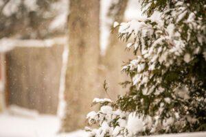 Неделя в стиле Seasons: 30 ноября — 6 декабря