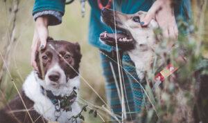 Пять рождественских историй про то, как собаки нашли новый дом