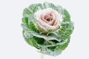 Что приготовить из капусты: четыре необычных рецепта