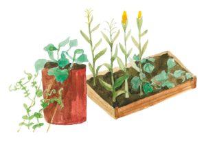 Все смешалось в огороде: главные принципы устройства сада