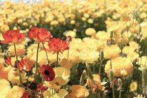 Как с открытки: семь цветочных ферм