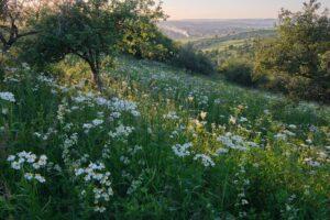 Гид от Травок: где, когда и как собирать растения для полезного чая